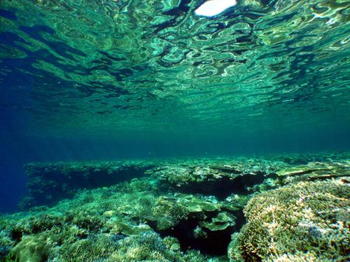 海中散歩☆: 浅瀬のサンゴ☆